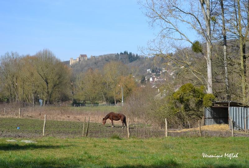 Parc naturel régional de la Vallée de Chevreuse : Le meilleur ami de l'homme 2