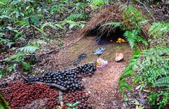 nid jardinier brun