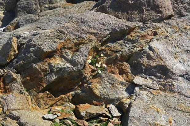 Au bord du chemin... la pierre