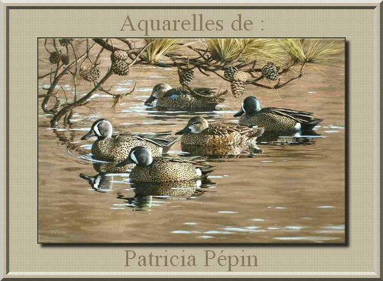 Aquarelles de : Patricia Pépin (peintre animalière)