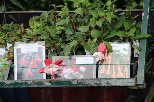 Fête des plantes d'Aiguebelette