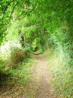 Le chemin de la Guinguette