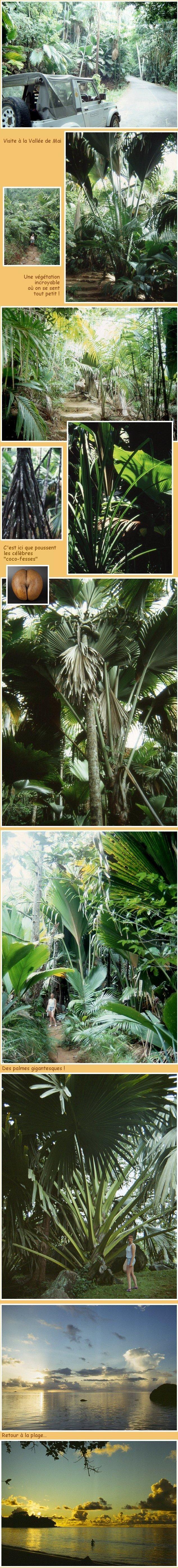 Les Seychelles - 6