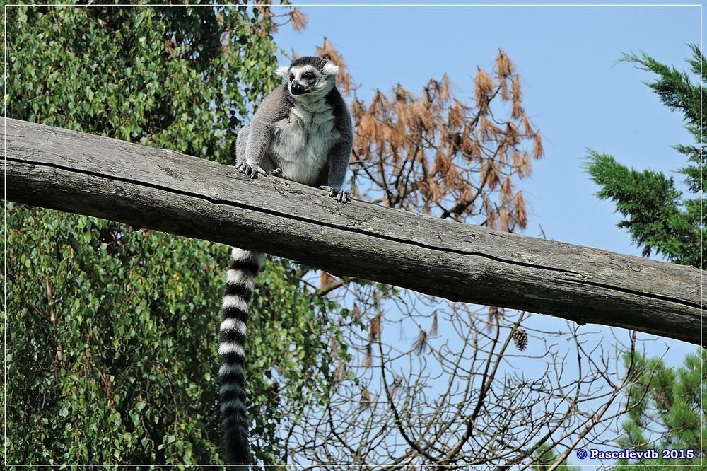 Zoo du Bassin d'Arcachon à La Teste - Août 2015 - 11/12