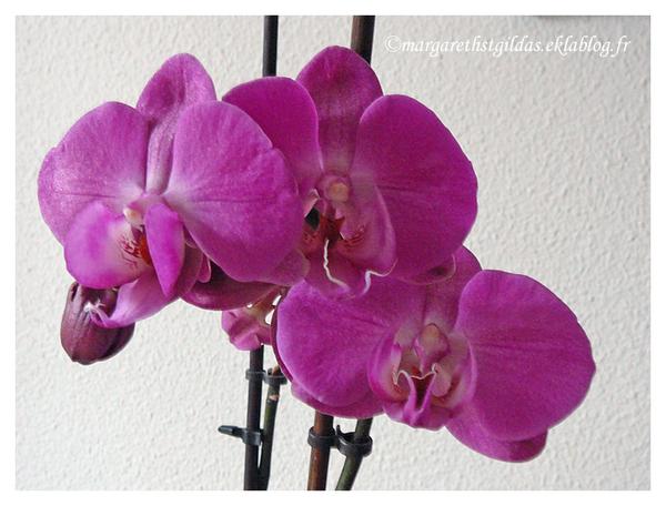 Epanouissement - Blooming