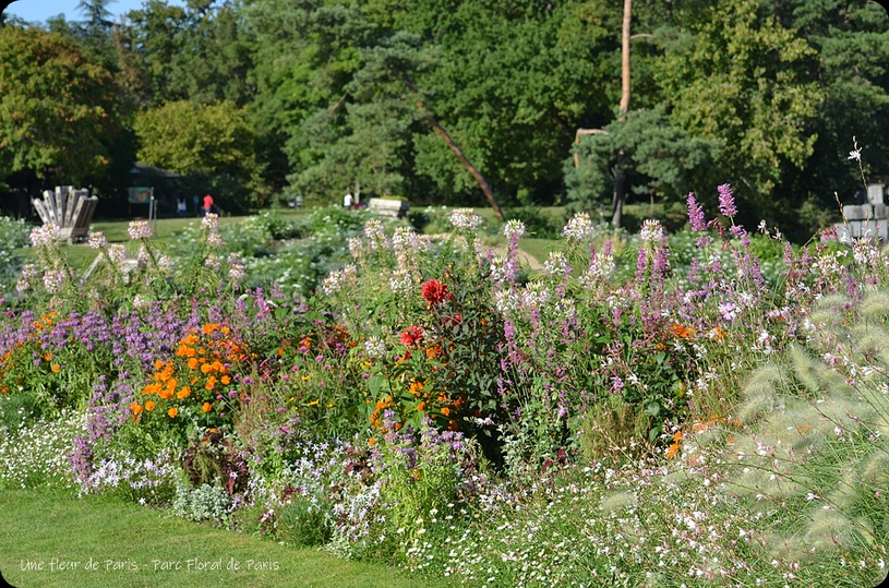 Parc Floral de Paris : Hommes et plantes, 50 ans de passion