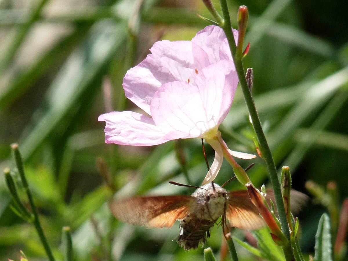 Fleur cruelle !
