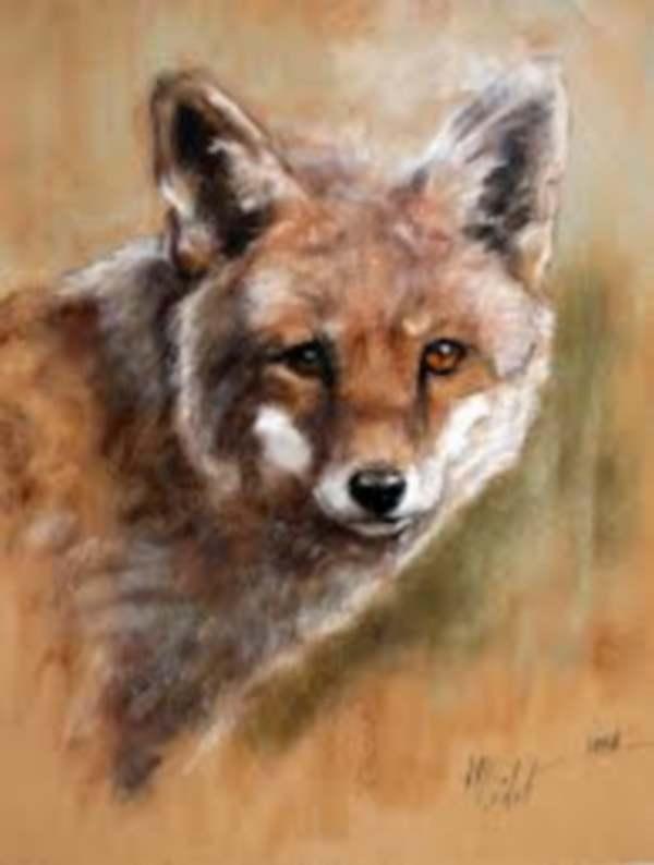 Peintures animalières de : Marie-Joëlle Cédat