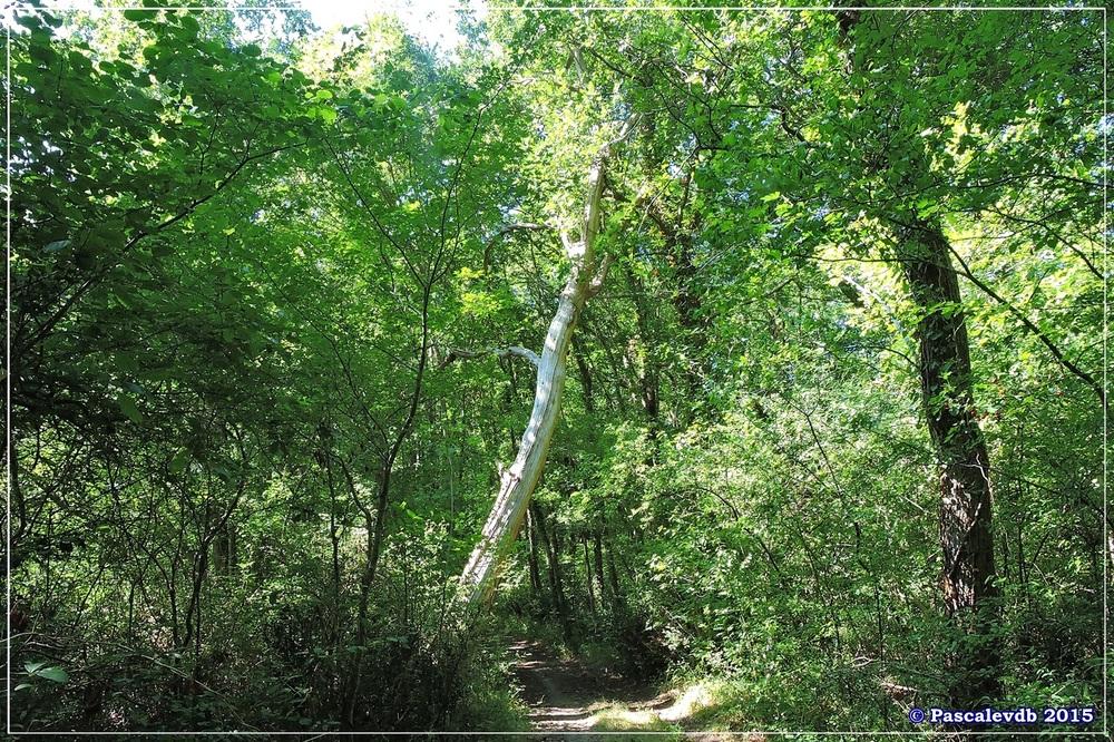 Du pont de l'Eyga aux rives de la Leyre - Août 2015 - 6/6