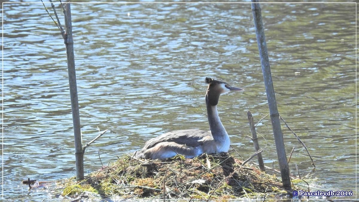 Printemps à la Réserve ornitho du Teich - Avril 2016 - 12/12