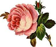 large-soft-pink-rose.jpg