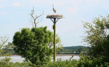 Les cigognes en Loire-Atlantique ...
