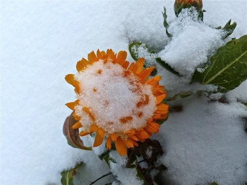 Touche hivernale :