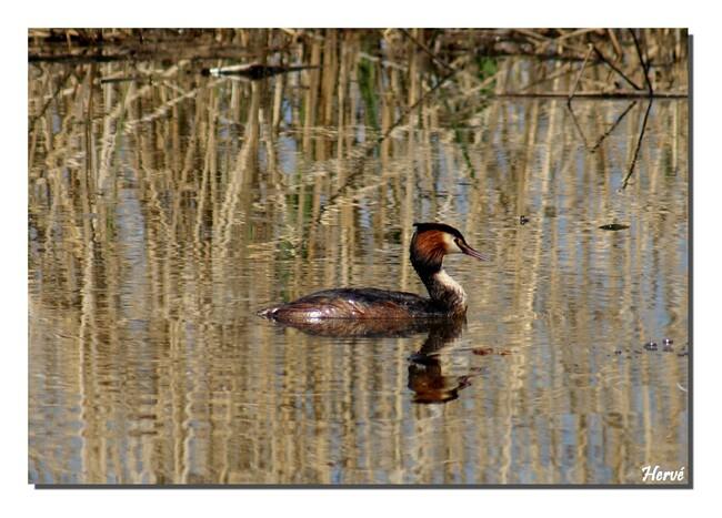 Les oiseaux au Lac du Der.