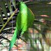 Dans son bel habit vert - Photo : Edgar