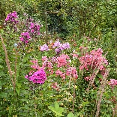 Le jardin des pépinières Emile et Marie-Rose Foucart...