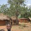 Togo Région des Plateaux Avocatier