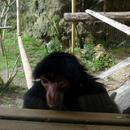 Mimiques derrière la vitre (1) - Photo : Yvon