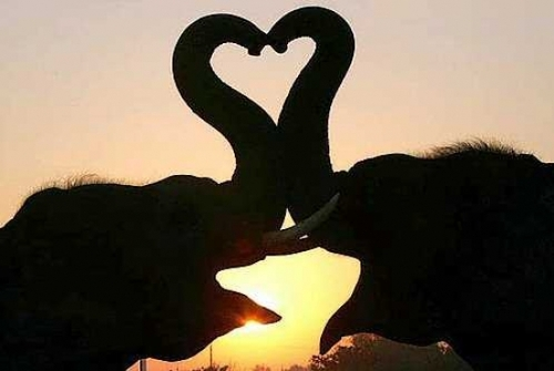 Coeurs dans la nature