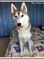 Naïko (6 mois)