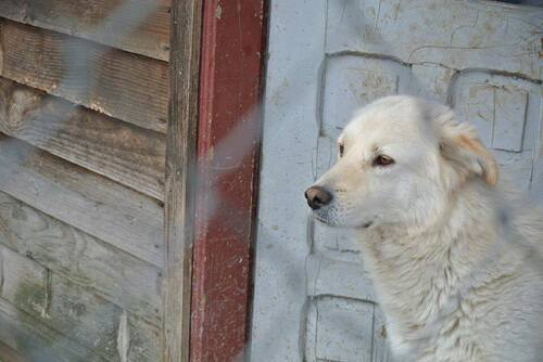 Urgence pour Paco, un amour qui a souffert en Roumanie