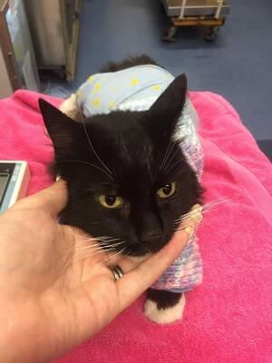 Un chat sauvé in extremis de la noyade