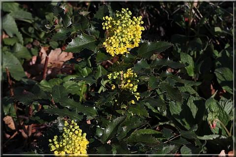 Arbustes à fleurs jaunes en mars