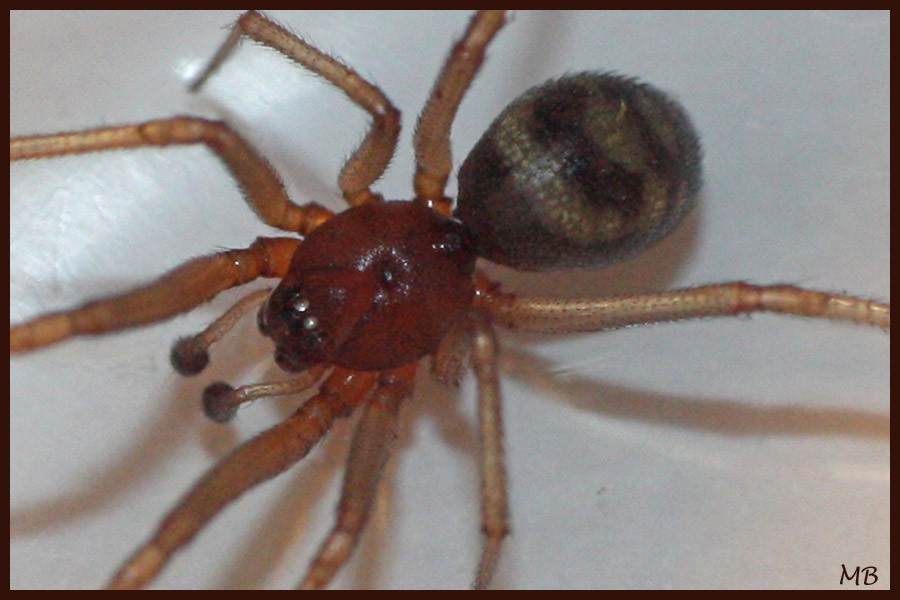 Arachnides-03-5410.jpg