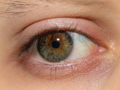 yeux-500x375