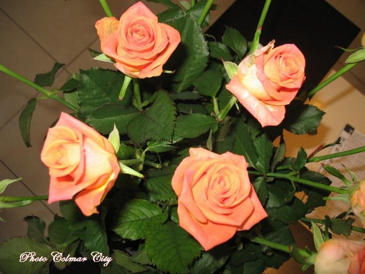 Des fleurs chez le coiffeur 33