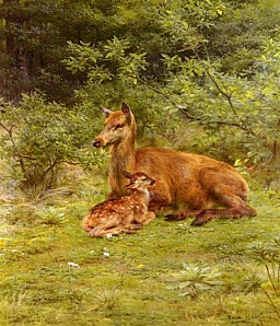 18486 Doe And Fawn In A Thicket f