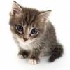 3396792395-jete-dans-les-toilettes-un-chaton-est-secouru-au-bout.jpg