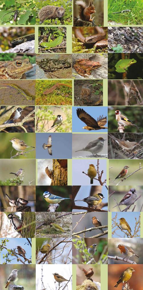 Biodiversité menacée au Pays des Olonnes