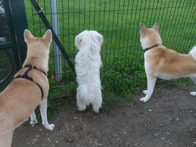 Emeraude, Tess au parc avec leur copain Coca