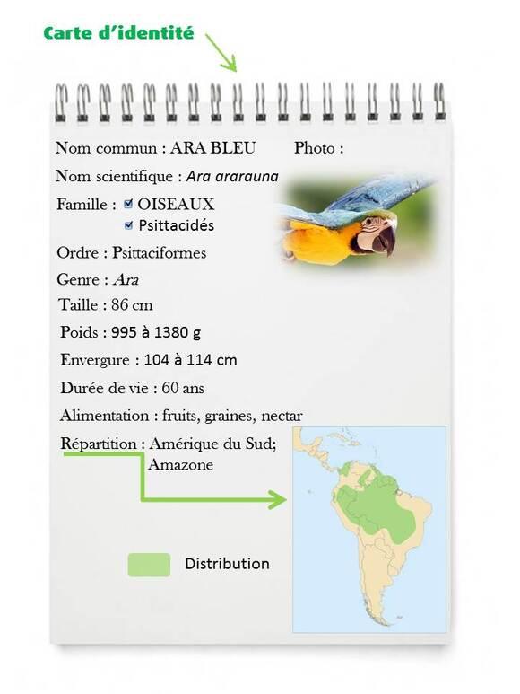 carte d'identité de l'ARA BLEU
