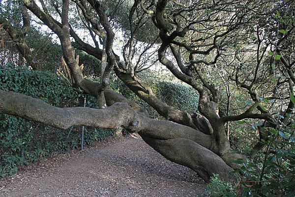 sentier des douaniers 8 les chênes verts