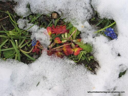 Limite pluie/neige