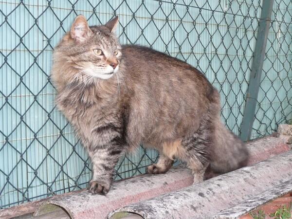 chat perte de poids polyuro polydipsie début insuffisance rénale chronique