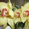orchid 032.JPG