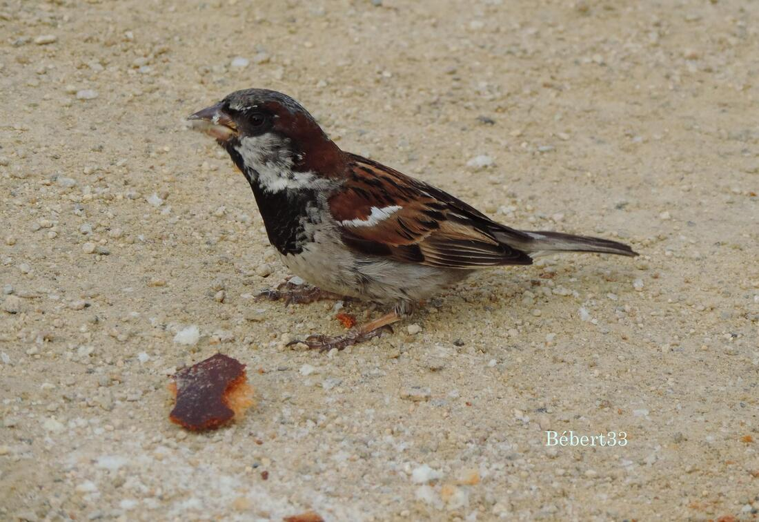 un bel oiseau qui mange