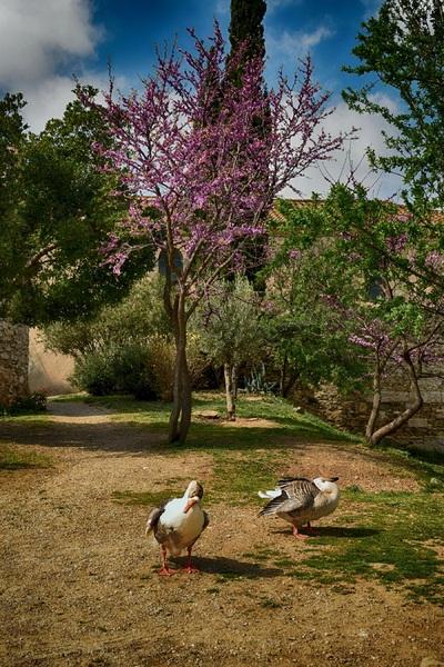 2016.03.30 Carcassonne, Homps, Le Somail (département de l'Aude) 2