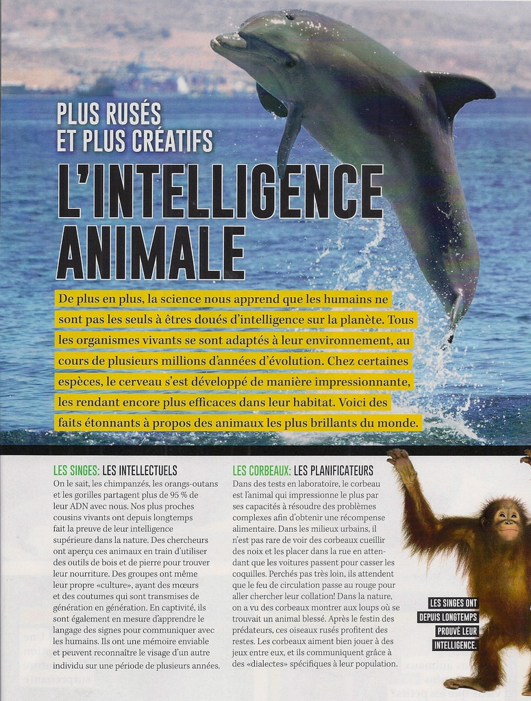 Grand Reportage:  Comprendre l'intelligence animale (2 pages)