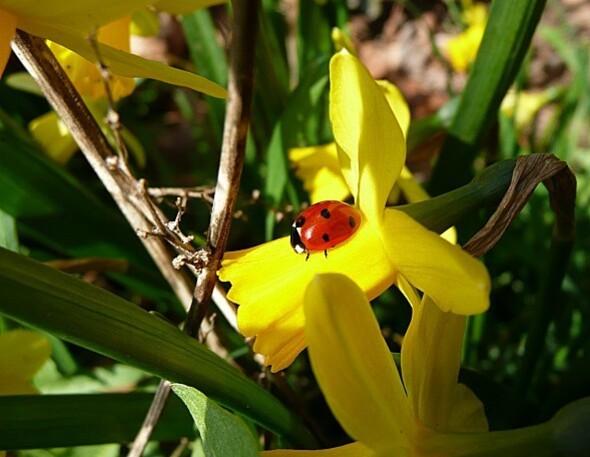 fleurs.21.03.11--3-.JPG
