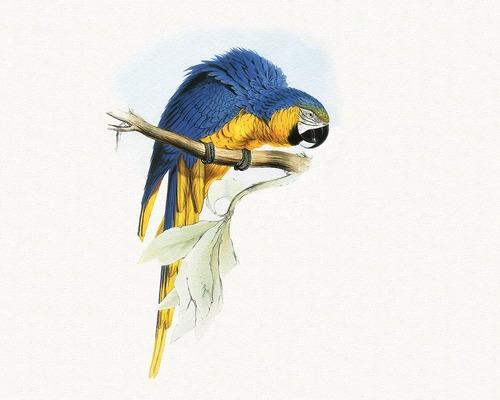 Divers types de perroquets - 2 -