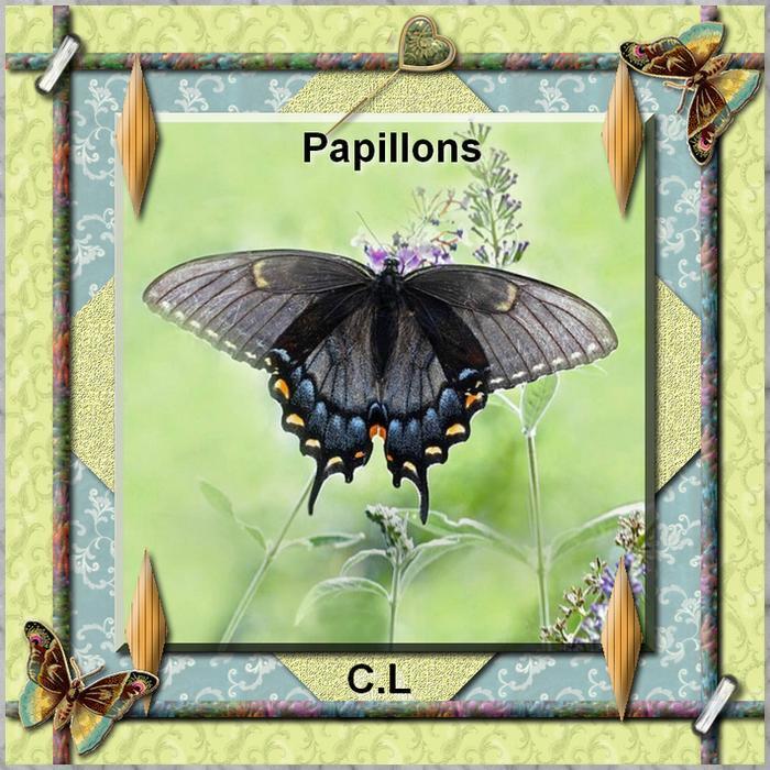 """C.Laurette Template n°4 """"les papillons """""""