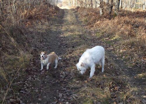 Mes deux chiens photographiés il y a quelque temps
