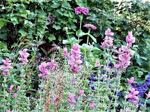 Top 5 des annuelles au jardin