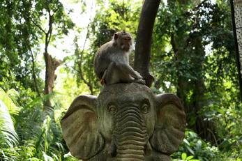 La forêt des singes à Ubud