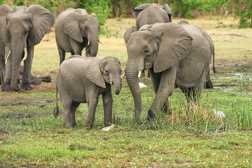 Déclin de 60% en 44 ans des populations d'animaux sauvages