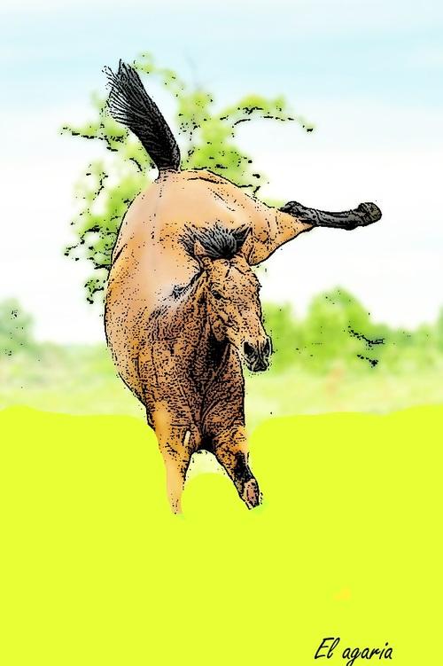 Concours de Dessin de Aliciou Horse !